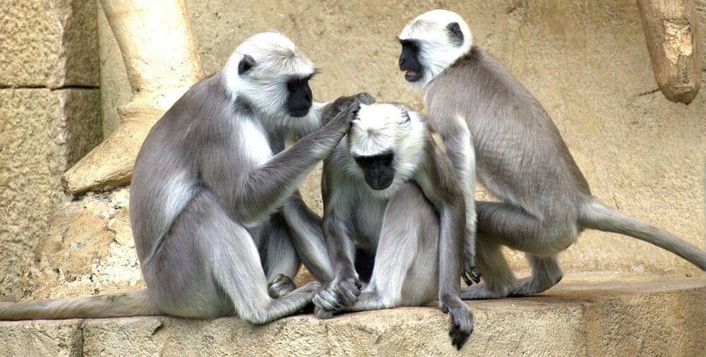 Geht nicht - Peanuts zahlen - Monkeys bekommen - PR-Newsletter 06-2018